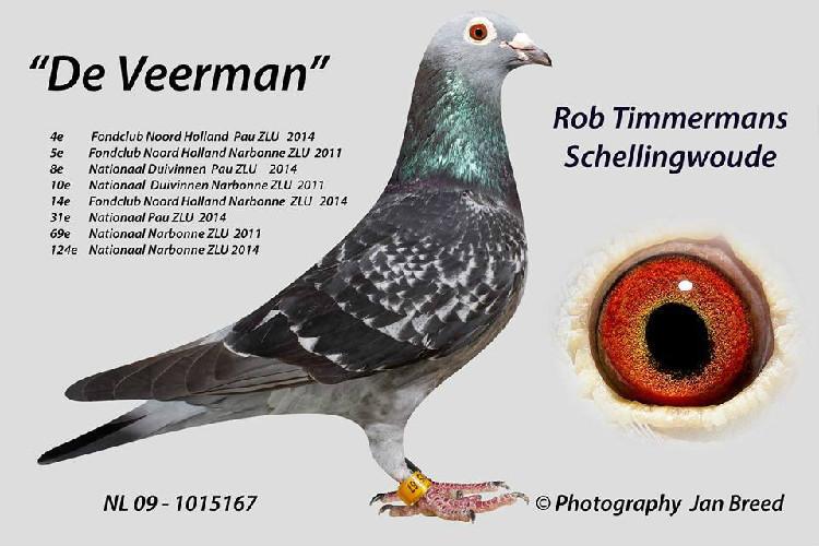 Rob Timmermans, Schellingwoude deel 2