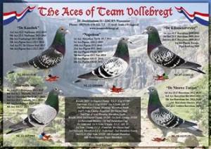35. Team Vollebregt