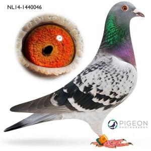 NL14-1440046 Anke verkleind