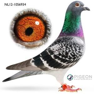 NL12-1056934 Sanne verkleind