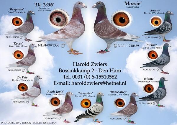 Harold Zwiers, Den Ham, Top in 2016 (2)