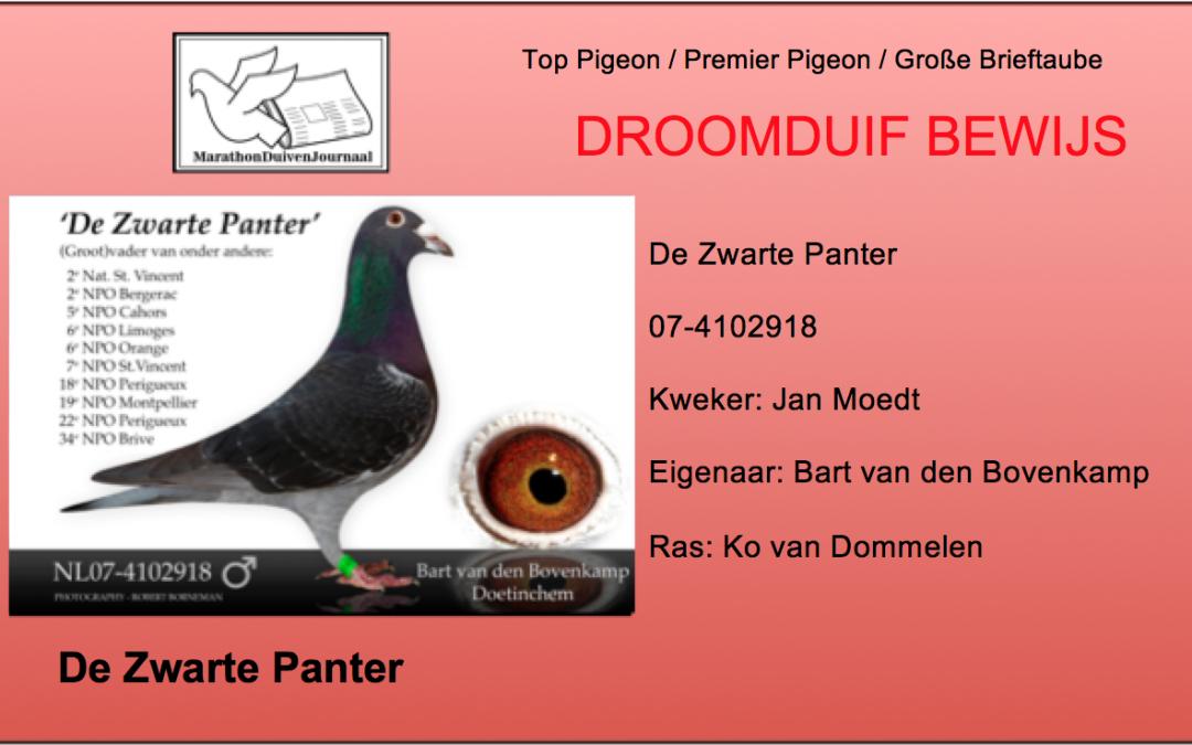 Perfecte Duif: De Zwarte Panter van Bart van den Bovenkamp