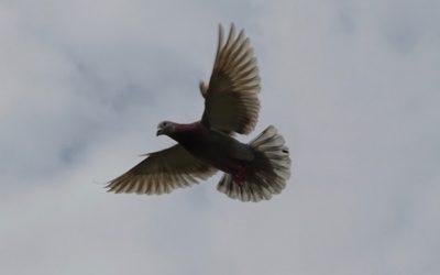 Dagboek van een duivenmelkster (4)