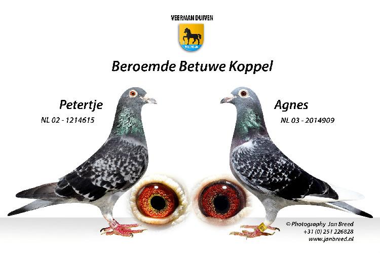 Gerrit Veerman, Volendam,  Eigenaar van het Beroemste Kweekkoppel van Nederland (2 en Slot)