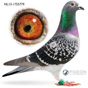 NL13-1755779 Erin verkleind
