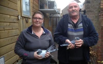 Verkoop duiven van wijlen Thom van Dee deel 1 (3)