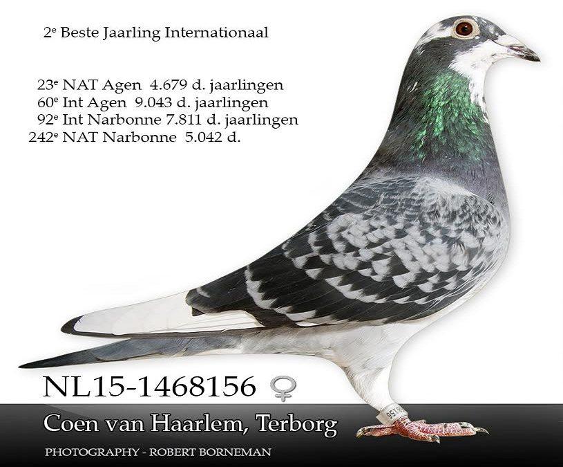 Coen van Haarlem, Terborg en zijn mooie ZLU-seizoen 2016 (deel 2 en Slot)