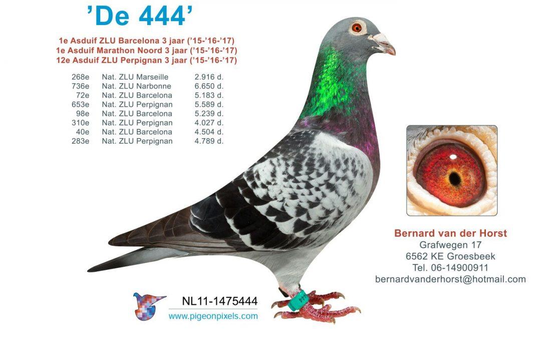 Bernard van der Horst, Groesbeek, Beste Barcelona-duif over 3 jaar