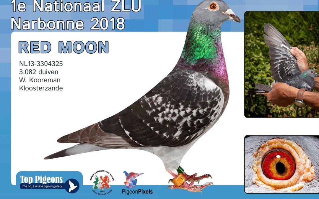 Wim Kooreman, Kloosterzande, wint nationaal Narbonne ZLU (deel 2 en slot)