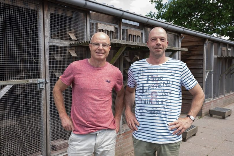 Gebr. André en Eddie Holleman, Tienhoven, winnen Agen ZLU bij de jaarlingen