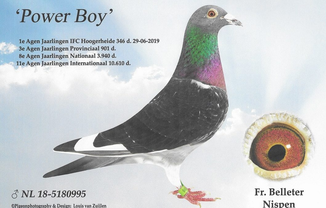Topper 2019 … Power Boy van Frans en José Belleter