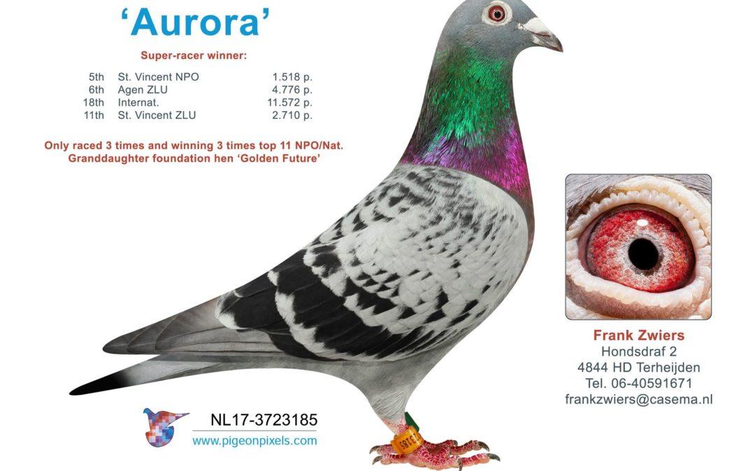"""Toppers 2019 … """"Aurora"""" en """"Pandora"""" van Frank Zwiers"""