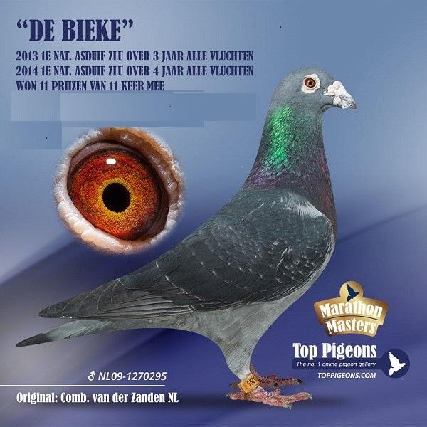 ZLU-topper met 9 prijzen in 3 jaar … Bieke van Jan van der Zanden