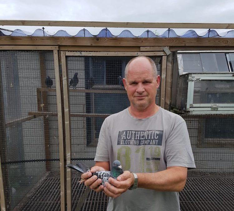 De verzorging van de duiven door Kees Droog tijdens de corona-crisis